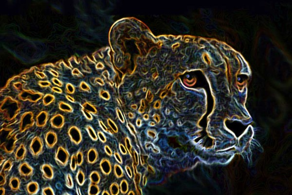 cheeta abstract-flat  -4 12x16